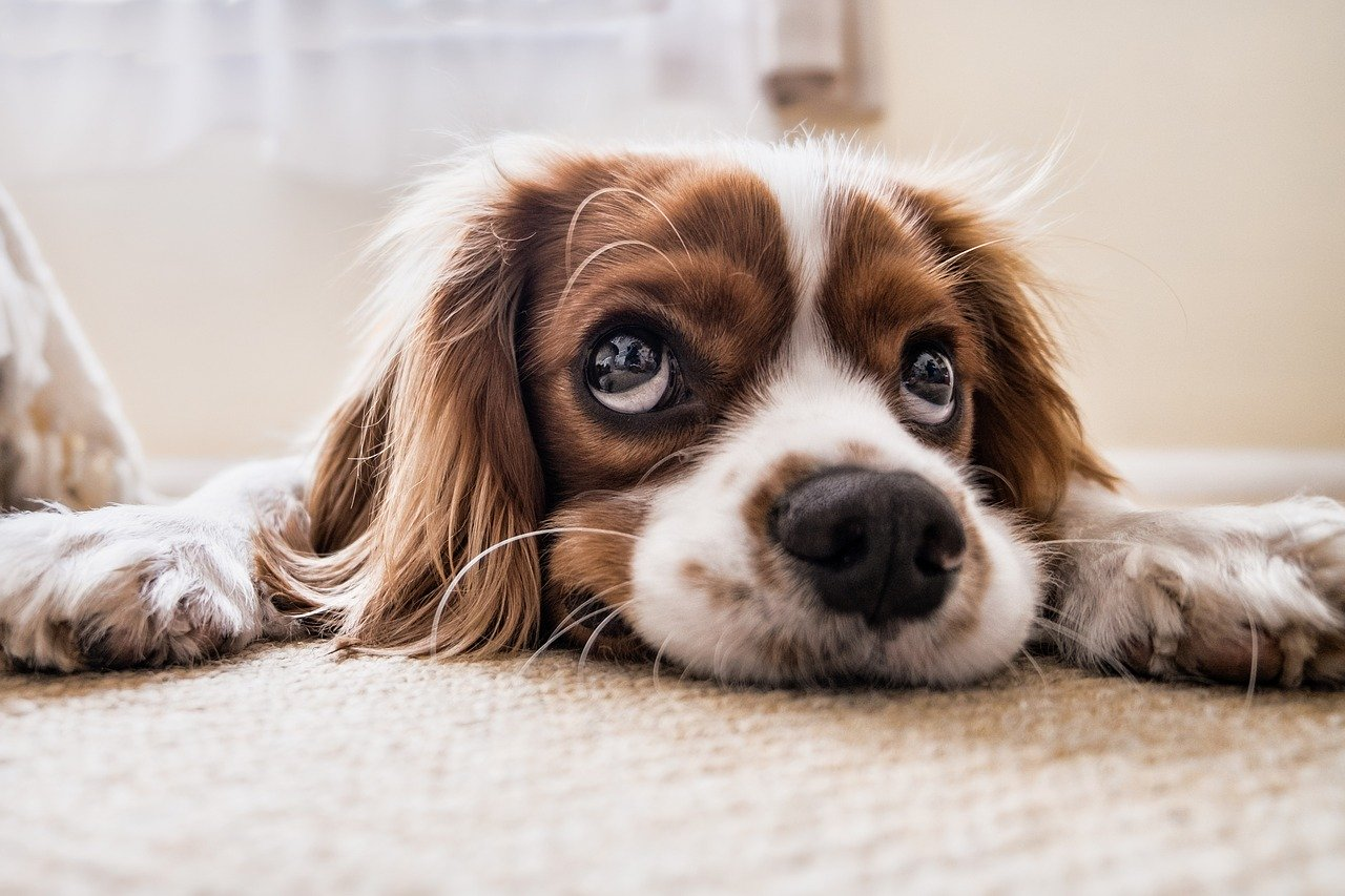 Собака – это действительно верный друг