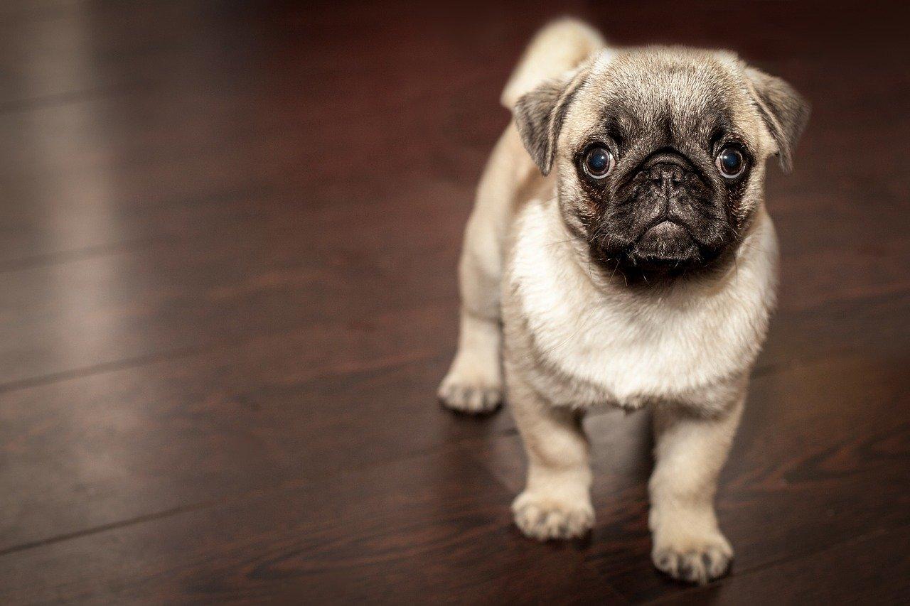 купите мне собаку