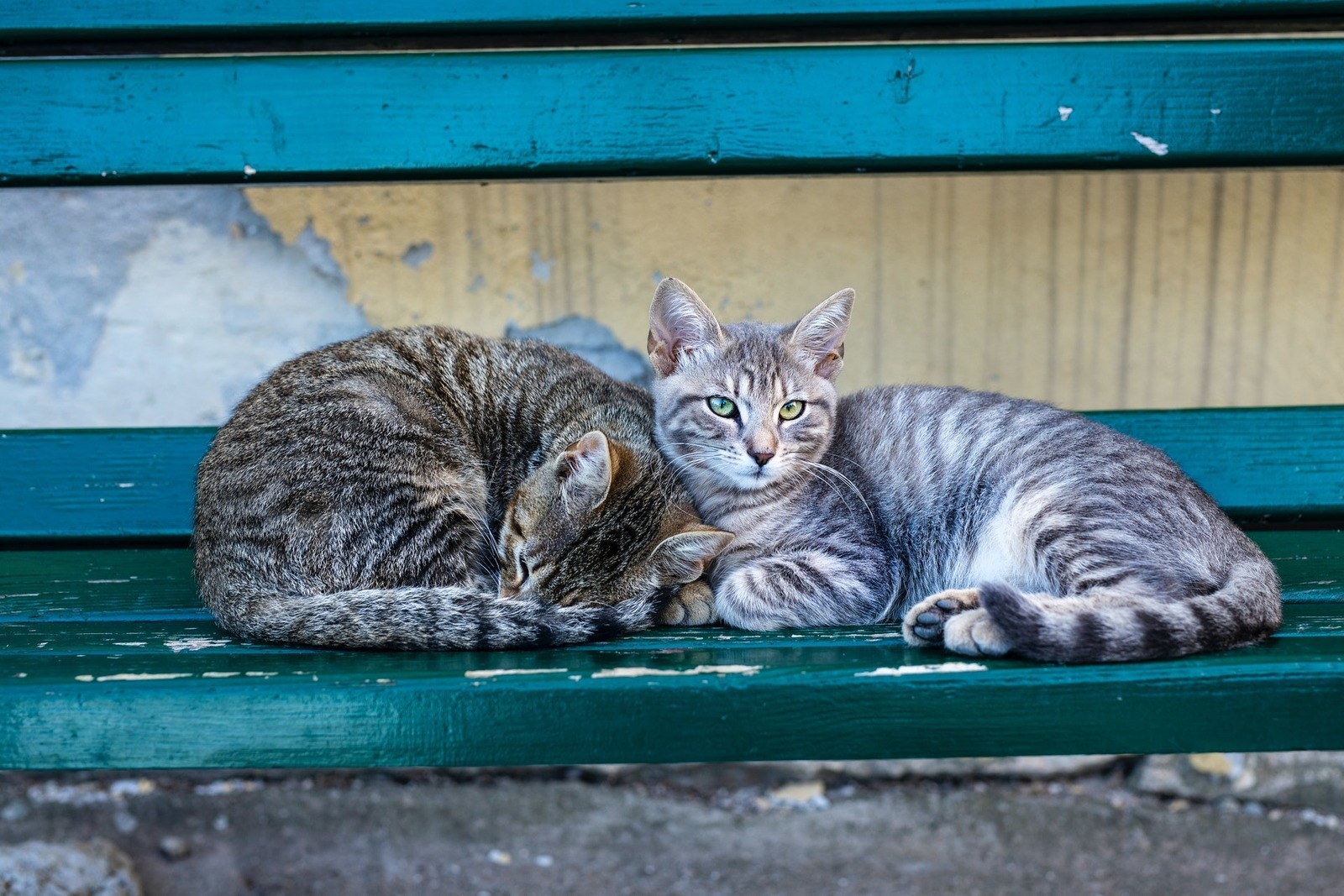 Соблюдайте правила проживания с домашними животными в вашей квартире.